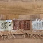 しょうざん 生紬 柿渋染2