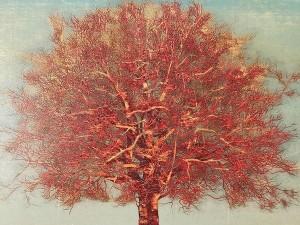 星襄一  大樹(赤)2